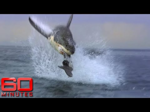 60 Minutes Australia: Shark Shield