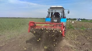 уборка картошки с помощью копалки GRIMME WH 200