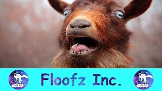 THE MOST HYSTERICAL SCREAMING AND FAINTING GOATS!