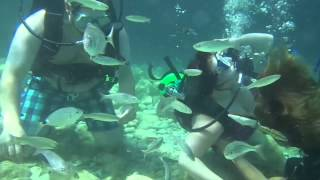 Woman nearly drowns when her partner proposes to her whilst scuba diving. thumbnail