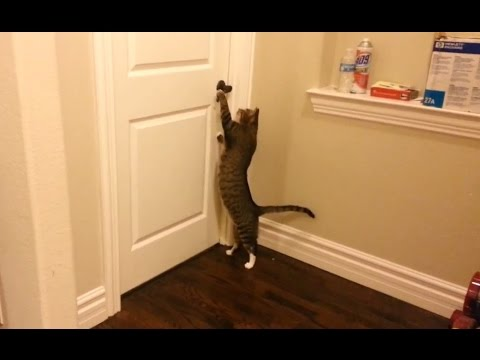 'Clever Cats Opening Doors Compilation' || CFS