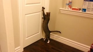 """Clever Cats Opening Doors Compilation"" 