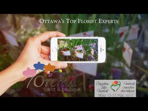 Flower Boy - Canada 150 | Orchid Florist
