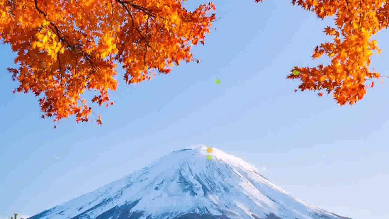 samsung theme live wallpaper japan autumn youtube