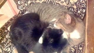 Кошки любят друг друга