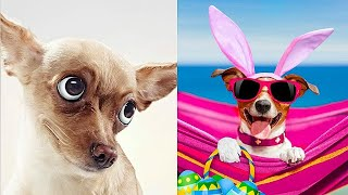 Funny Animals! Cute Funny Animals Video Compilation #17