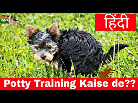 How to potty train your dog in hindi : Dog training in Hindi