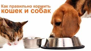 Кормление кошек и собак