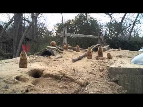 Zoo Tube Prairie Dogs