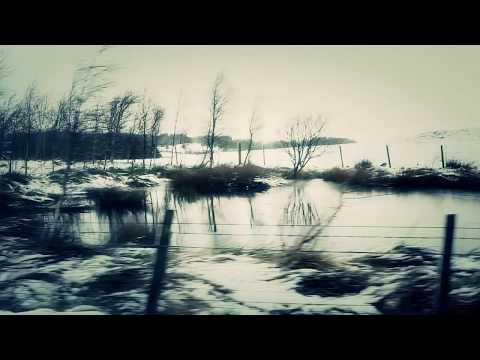 Snowgoose - Sycamore