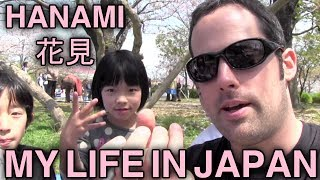 Hanami - Sakura - Cherry Blossoms - 花見 - My Life in Japan - 1 - English Lesson on Japanese Culture