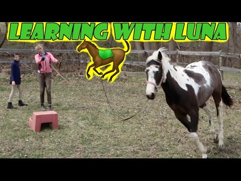 Learning with Luna 🐎 (WK 325.4) | Bratayley