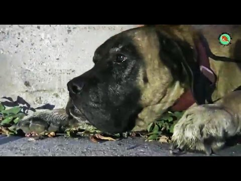 The miracle of life - Dog rescue were footsore and starve, this video will bring tears to your eyes