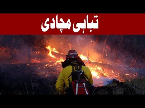 California Wildfire Death Toll Rises To 40 | Headlines 12 PM | 15 October 2017 | Express News