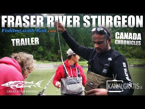 [TRAILER] Canada Chronicles - Fraser River Sturgeon ft. Fishing with Rod & Kanalgratis.se