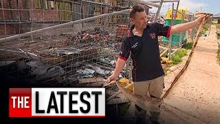 Warning issued about giant boa constrictor at large in Western Sydney | 7NEWS