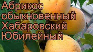 Абрикос обыкновенный Хабаровский Юбилейный 🌿 обзор: как сажать, саженцы абрикоса