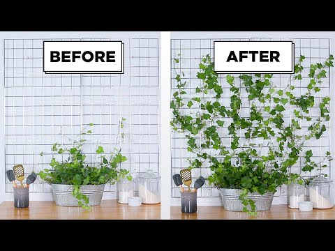 DIY Ivy Garden Wall