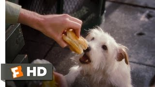 Hotel for Dogs (1/10) Movie CLIP - How to Steal Food (2009) HD