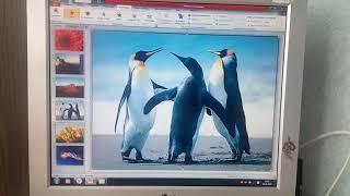 Уроки по созданию слайд-шоу фильма с фото и музыкой на PowerPoint' е для тех кто не умеет