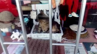 Живой кот на витрине магазина в г. Порту.