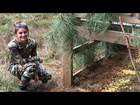 Transporting, Baiting, & Setting a Hog Trap!