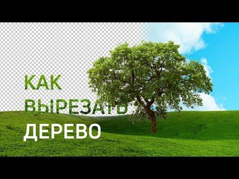 Фотошоп уроки | Как вырезать дерево в фотошопе (43 выпуск)