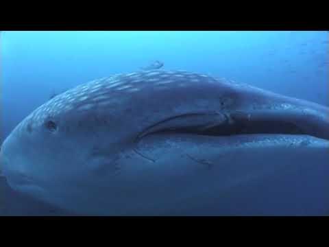 English - Whale