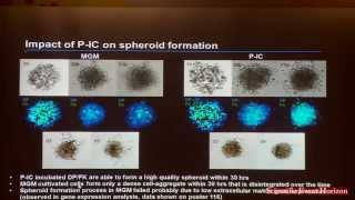 Dr Thomas Hengl: A 3-D Hair Follicle Spheroid Model for Investigation of Diminished Hair Growth