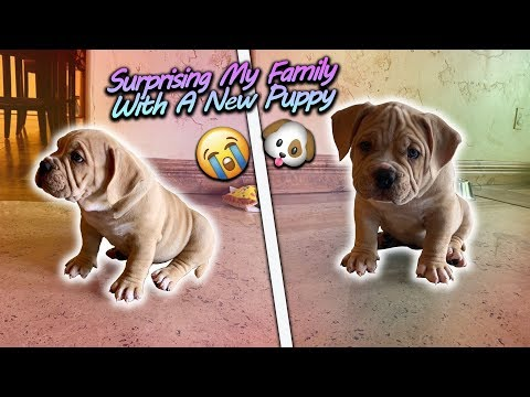 Surprising My Family With A New Puppy!! (Super Cute)