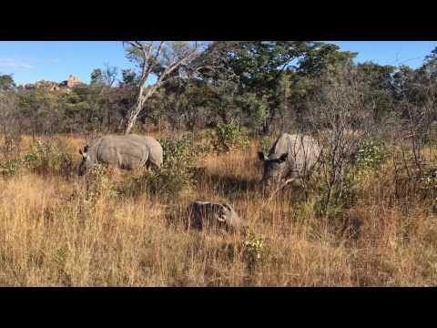 Rhino Family at Matobo