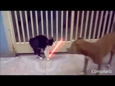 кошкины приколы - Приколы ютуба YouTube смотреть смешные