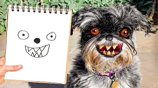 Funny Cats And Dogs Videos That Will Make You Laugh All Day Long