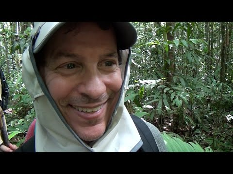 Hiking in the Amazon Jungle