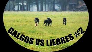 GALGOS VS LIEBRES #2