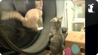 Cats terrorize a wheel - Cat vs. Giant Wheel