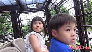 スーパージャングルバス 頭上でエサやり体験!! サファリパーク 動物園 お出かけ こうくんねみちゃん ZOO superjunglebus Feeding on head thumbnail