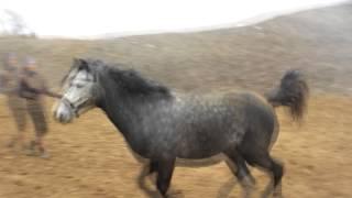 Как на корде бегают обычные лошади [Часть 2]