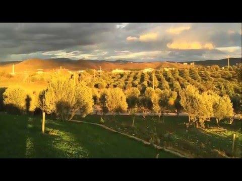 Torlak Çiftliği Hayalimiz