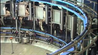 NOWOCZESNE TECHNOLOGIE W CHOWIE BYDŁA MLECZNEGO cz  3 Krowy na karuzeli