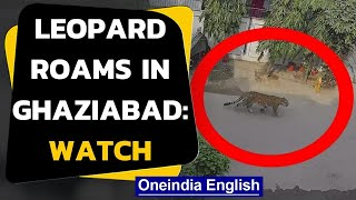 Leopard roams freely in Ghaziabad: Viral video | Oneindia News