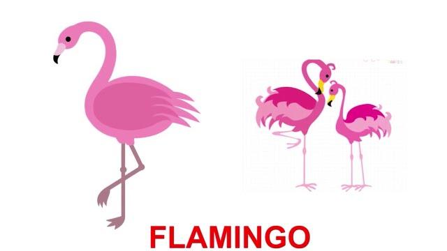 Картинки по запросу flamingo kids