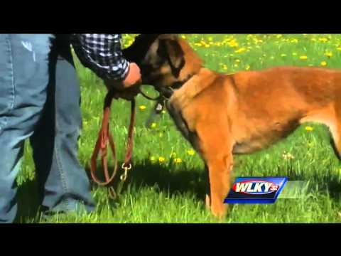 Marine Corps veteran reunited with hero dog