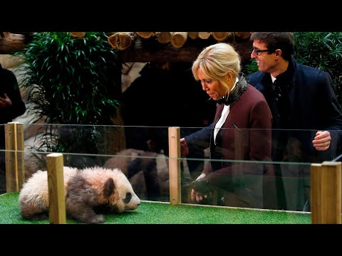 Panda cub growls and jumps at France's first lady, Brigitte Macron