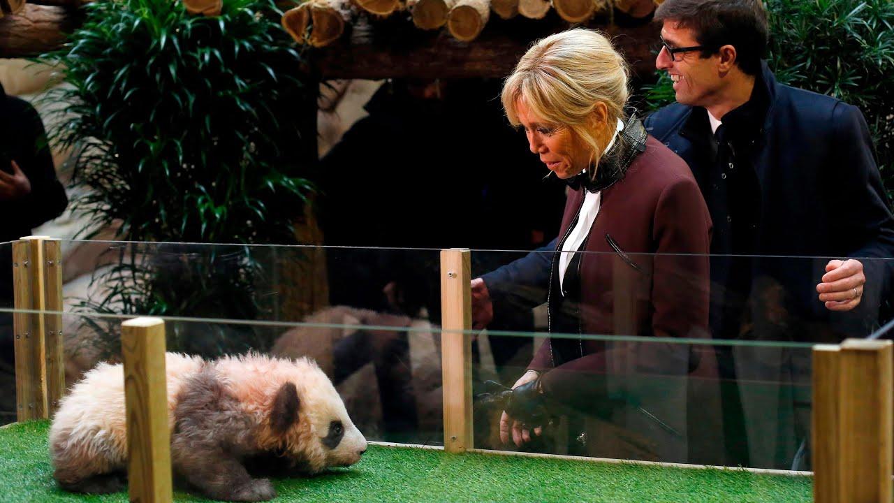 panda-cub-growls-and-jumps-at-france-s-first-lady-brigitte-macron