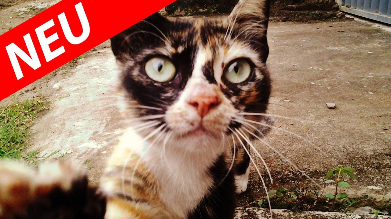 Katzen Lustig Video
