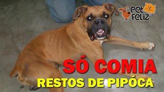BOXER RESGATADO AO LADO DE UM CARRINHO DE PIPOCA, COM TUMOR NA PATA.