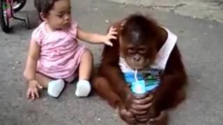 Những màn hài hước nhất của trẻ em và động vật