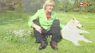 Merkels Liedergruss:
