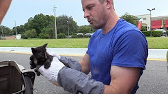 Tiny Tortie Kitten Rescued from Underneath Car!